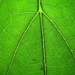 Macro shot of green leaf texture — Stock Photo