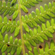 Macro shot of fern leaves with green beautiful pattern in the blurry background — Stock Photo