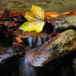 Autumn leaves on a stones covered with moss in mountain stream — Stock Photo