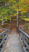 Wooden bridge in autumn forest — Foto de Stock