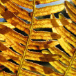 Stock Photo: Golden fern pattern in backlight