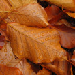 Stock Photo: Fallen autumn leaves with dewdrops