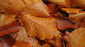 Fallen autumn leaves with dewdrops — Stock Photo