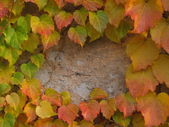 Grundge wall background covered by autumn leaves — Stock Photo