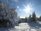 Fir trees on winter snow covered mountain and sun shine in blue sky — Foto de Stock