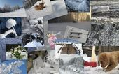 Winter theme collage 3 — Stock Photo