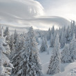 Fir trees covered by snow, view from above and cloud Altocumulus lenticuleris — Stock Photo #18878973