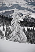 Winter landscape with white fir tree in the foreground — Stock Photo