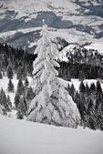 冬季风景与白杉树在前景 — 图库照片
