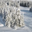 Stock Photo: Winter look of fir forest, view from above