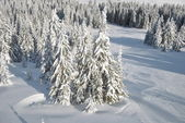 Winter look of fir forest, view from above — Stock Photo