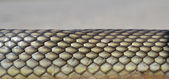 Snake skin abstract background — Stock Photo