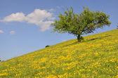 Tree on yellow hill — Stock Photo