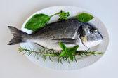 Fresh fish 1 — Stock Photo