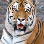 Постер, плакат: Tiger 2
