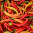 Semi-dry peppers — Stock Photo