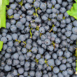 Black grapes background — Stock Photo