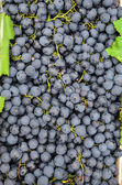 Black grapes background — Foto de Stock