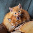 Two kittens — Stock Photo
