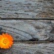 Marigold on wooden table — Stock Photo