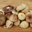 Forest mushrooms — Stock Photo