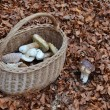 Picked mushrooms in the basket — Stock Photo