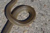 Snake letter — Stock Photo