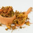 Stock Photo: Dry St. John's Wort