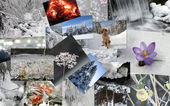 Winter theme collage — Foto Stock