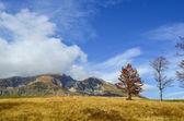 поздней осенью горный луг — Стоковое фото