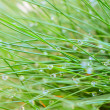 Stock Photo: Dew drops on grass