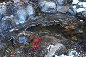 Red berries on ice — Stock Photo