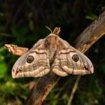 Moth — Stock Photo