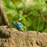 Green lizard — Stock Photo #49846715