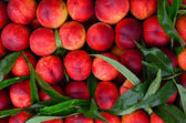 Fresh peaches background — Stock fotografie