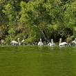 Group animals - pelicans and cormorans — Stock Photo