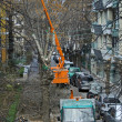 Стоковое фото: Technology line for scission and gather of high trees