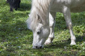 White Horse Eating — Stock Photo