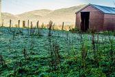 Frosty ground — Stock Photo