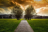 Pathway through trees — Stock Photo