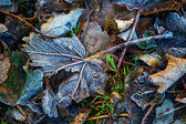 Broken frosty leave — Stock Photo