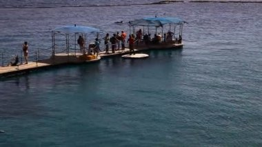 Dolphin Reef, Red Sea, Eilat — Stock Video
