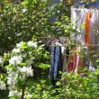 Laundry hangs in fresh air in the garden - Stock Photo