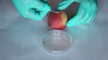 Scientist takes a microbiological sample peach test e coli microbe infection — Stock Video