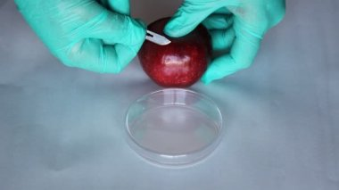 Scientist takes a microbiological sample apple test e coli microbe infection — Stock Video