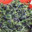 Crashing grapes and making wine - Photo