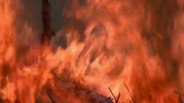 Burning wood smoking fire — Stock Video