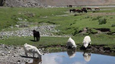 монгольский пейзаж — Стоковое видео