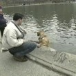 Stock Video: Sunday in Central Park, New York, USA: dog swims