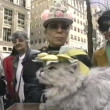 Easter dog in Fifth Avenue, New York, USA — Stock Video